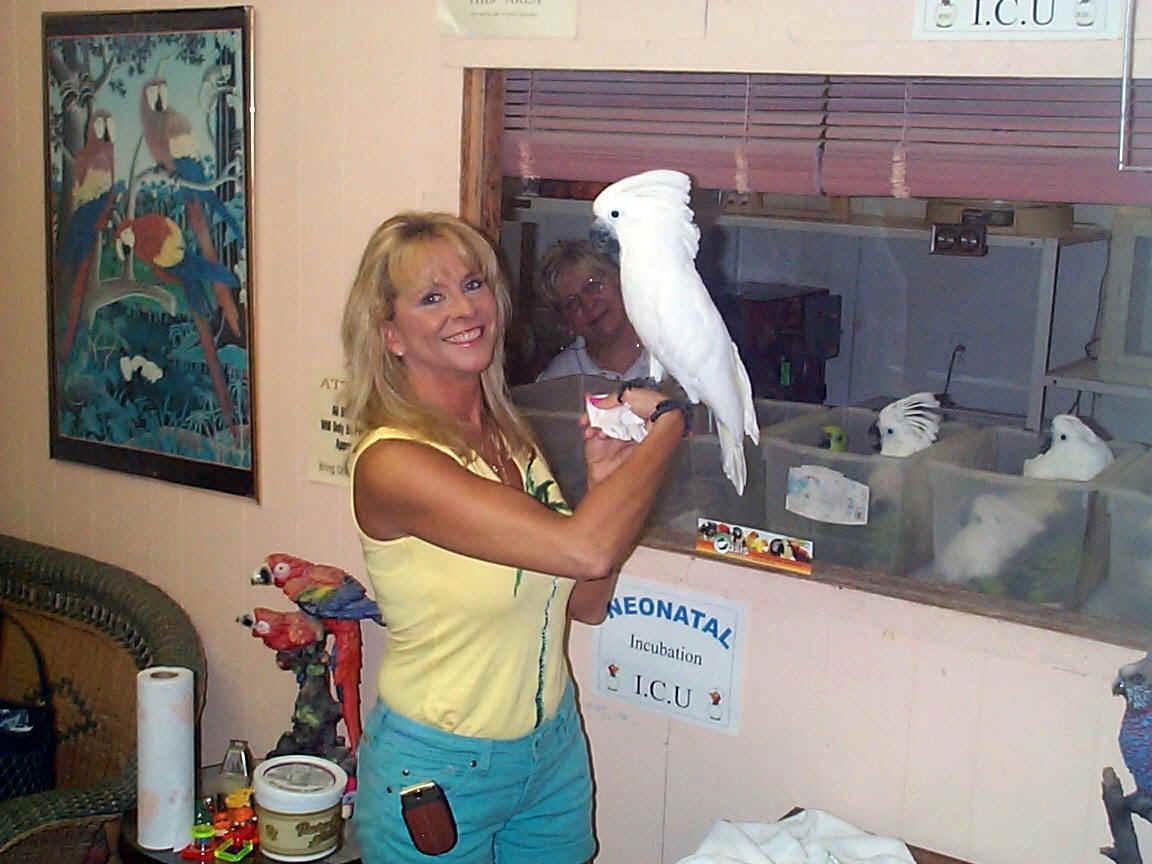 DomesticSale: umbrella cockatoo